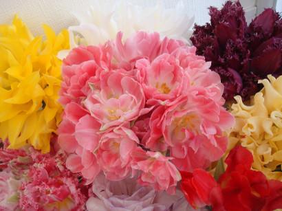 Yukis_tulip